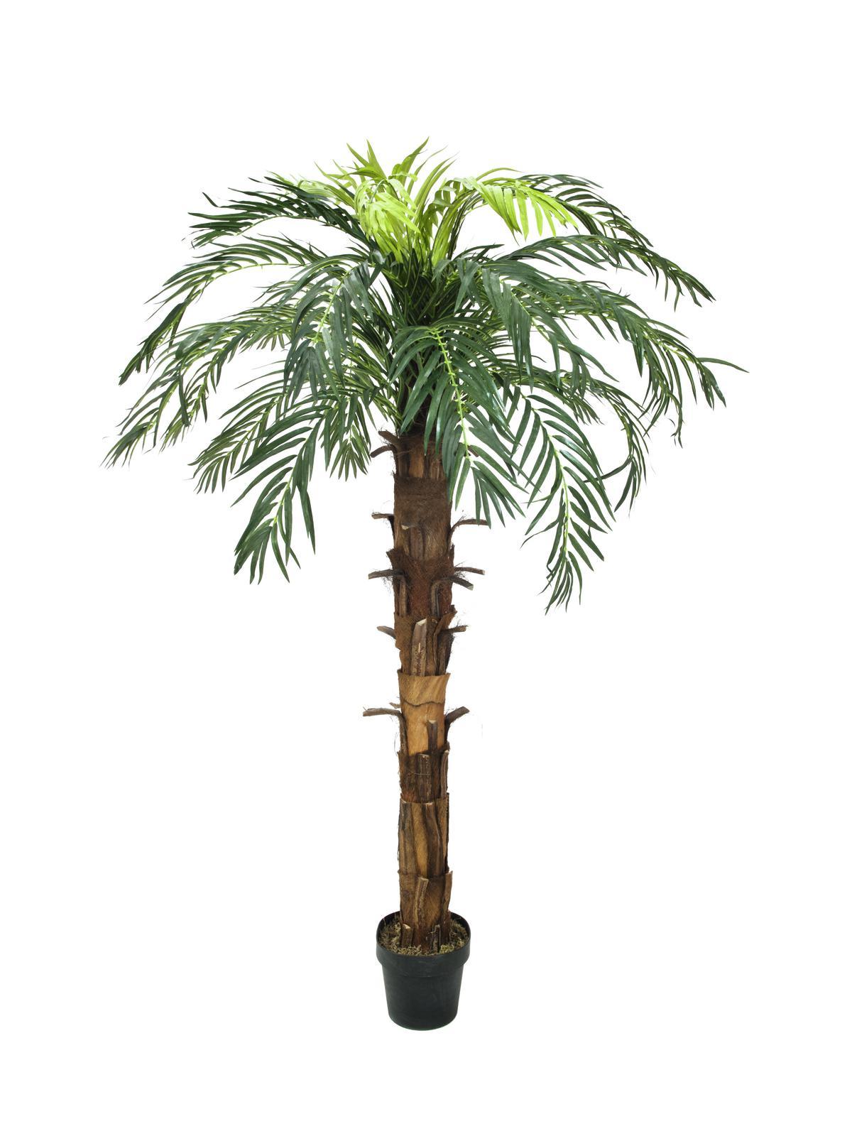 Image of   Kunstig Coconut king palm, 180cm