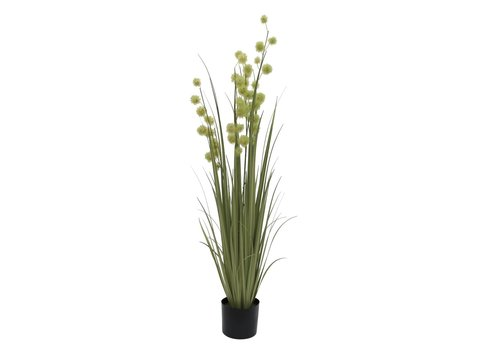Image of   Allium Grass, 122cm