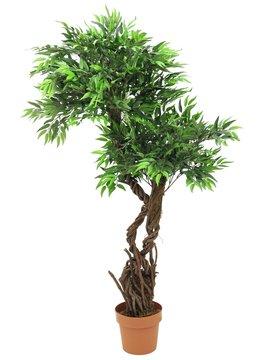 Europalms Willow, 145cm