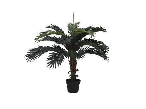 Image of   Coconut palm, 90cm