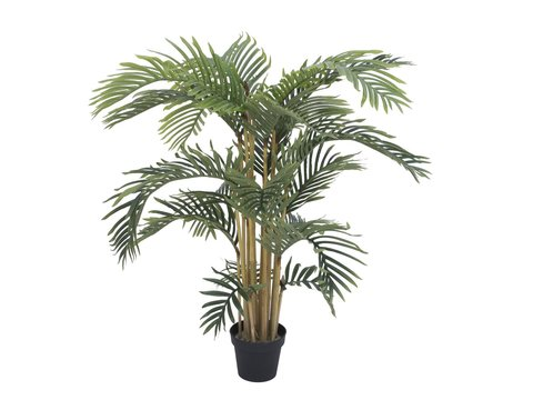 Image of   Kentia palm tree, 140cm