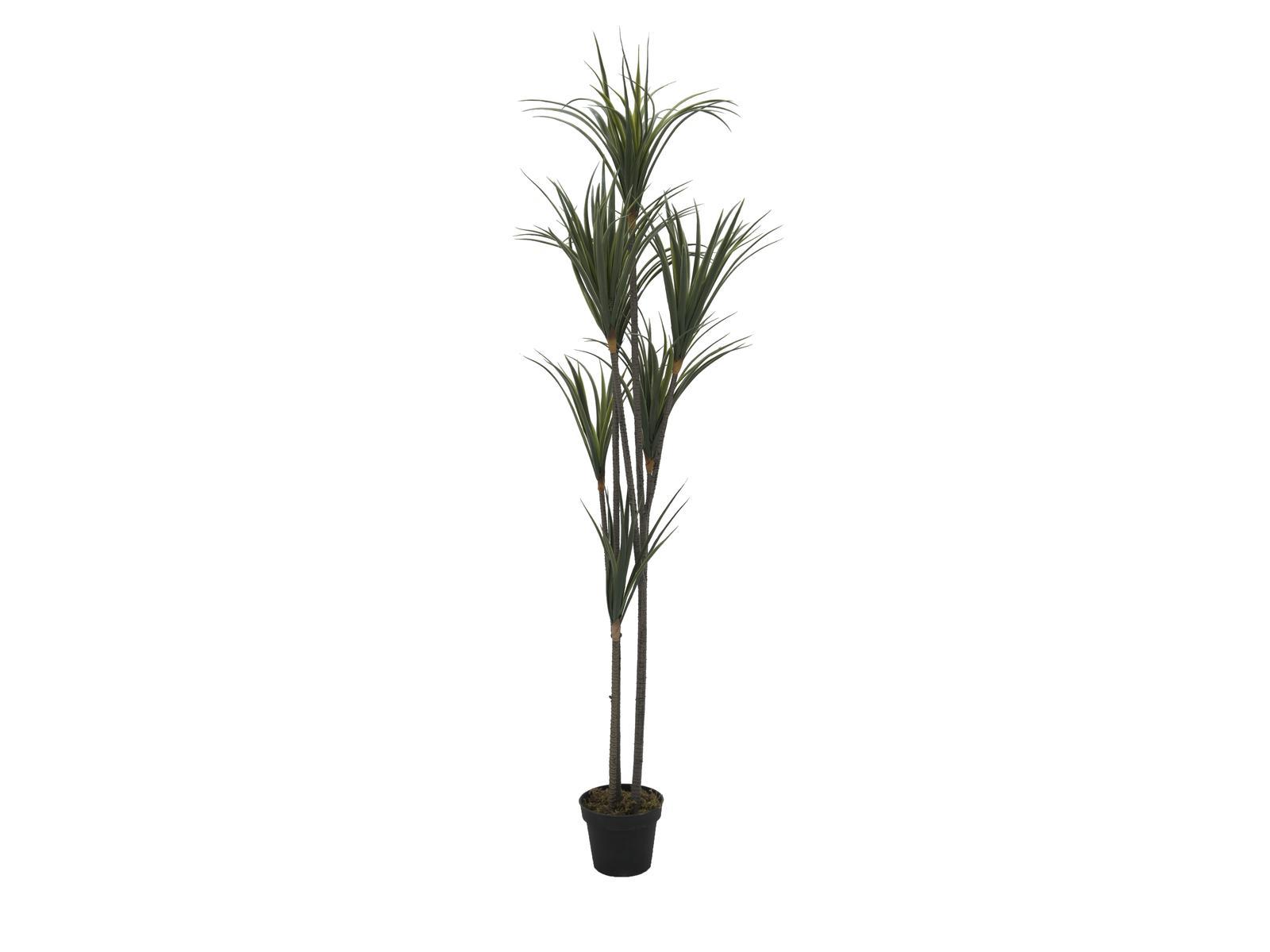 Image of   Kunstig Yucca palme med stamme 180cm
