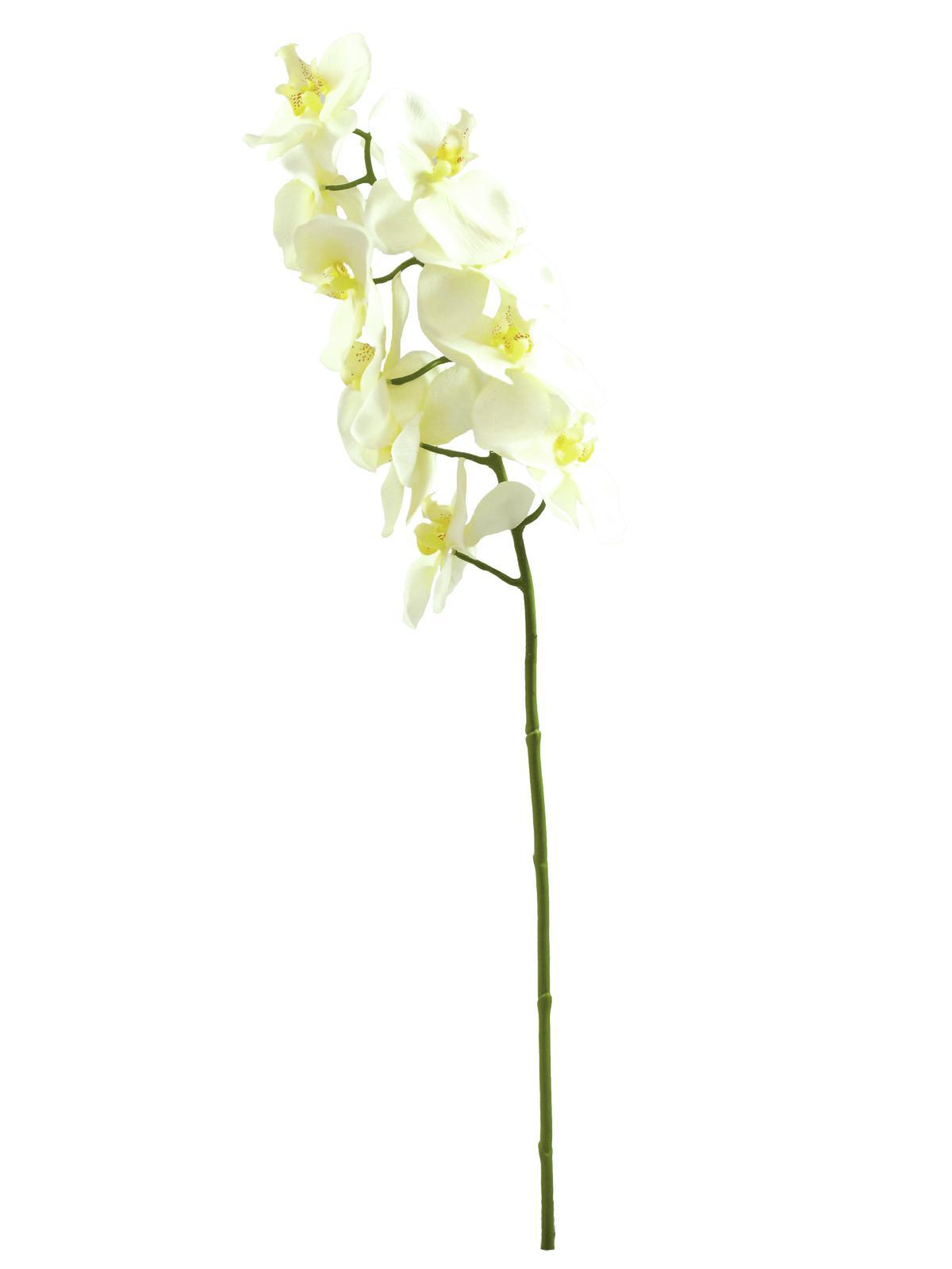 Image of   Kunstig Orchidspray, creme, 70cm