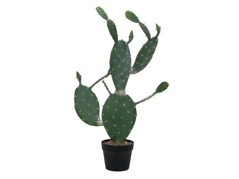 Nopal cactus, 76cm