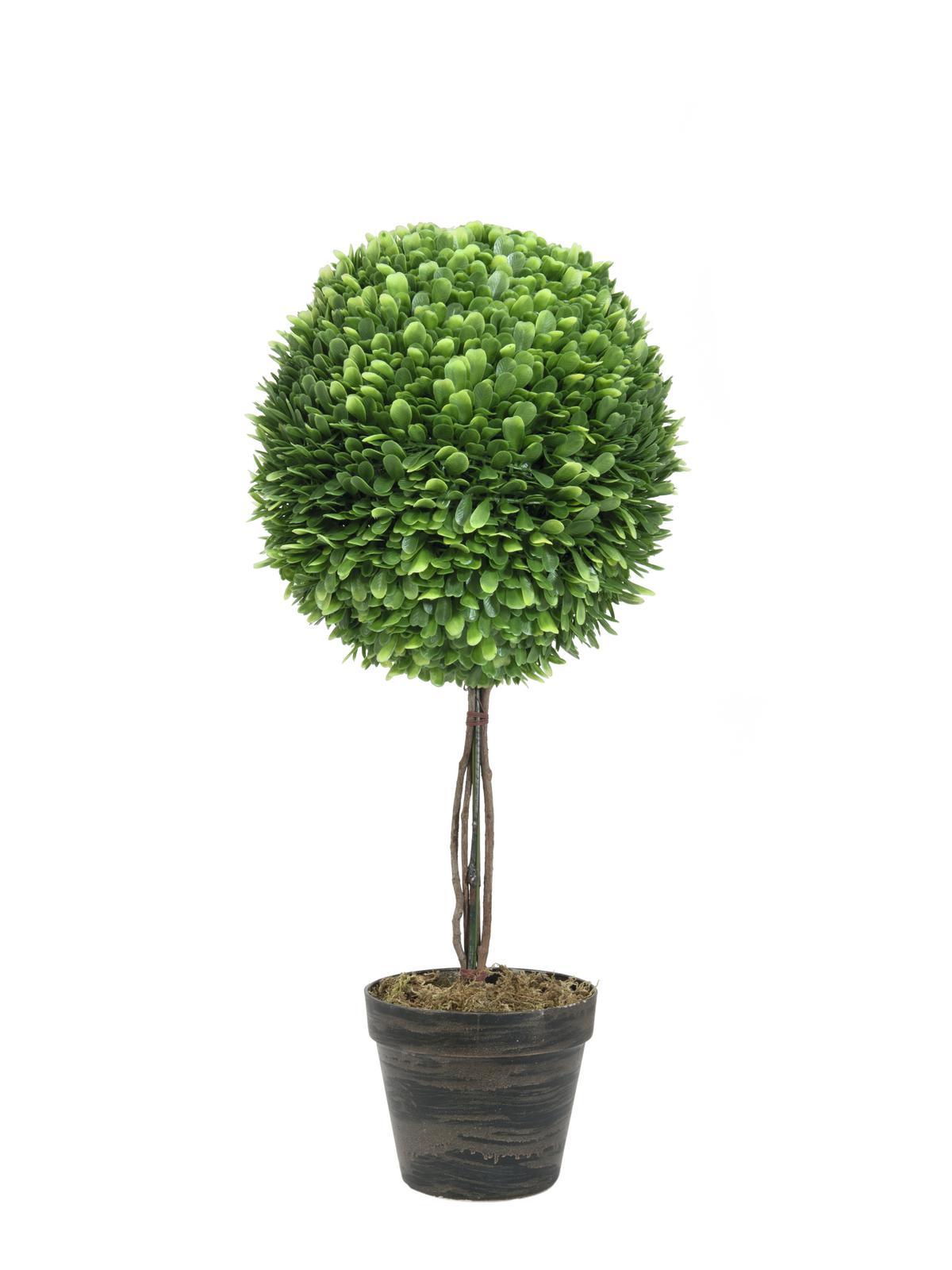Image of   Kunstig Boxwood tree, 60cm
