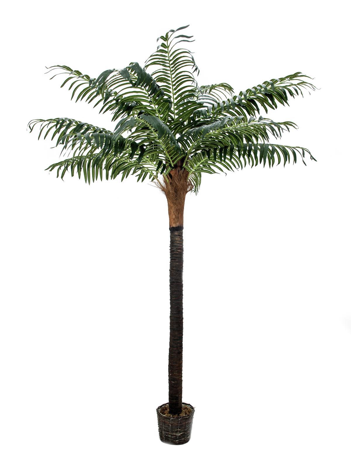 Image of   Kunstig Phoenix palme med ægte stamme, 210 cm