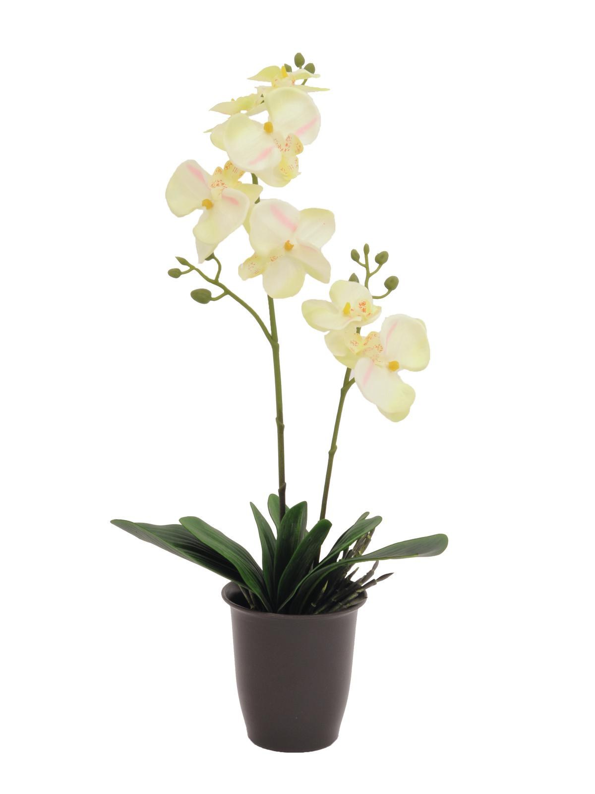 Image of   Kunstig Orchid, cream, 57cm