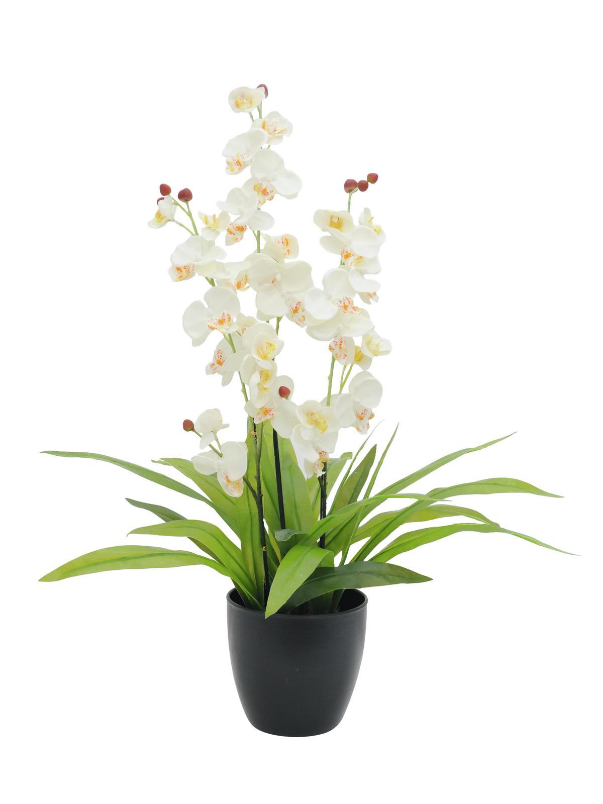 Image of   Kunstig Orchid, white, 80cm