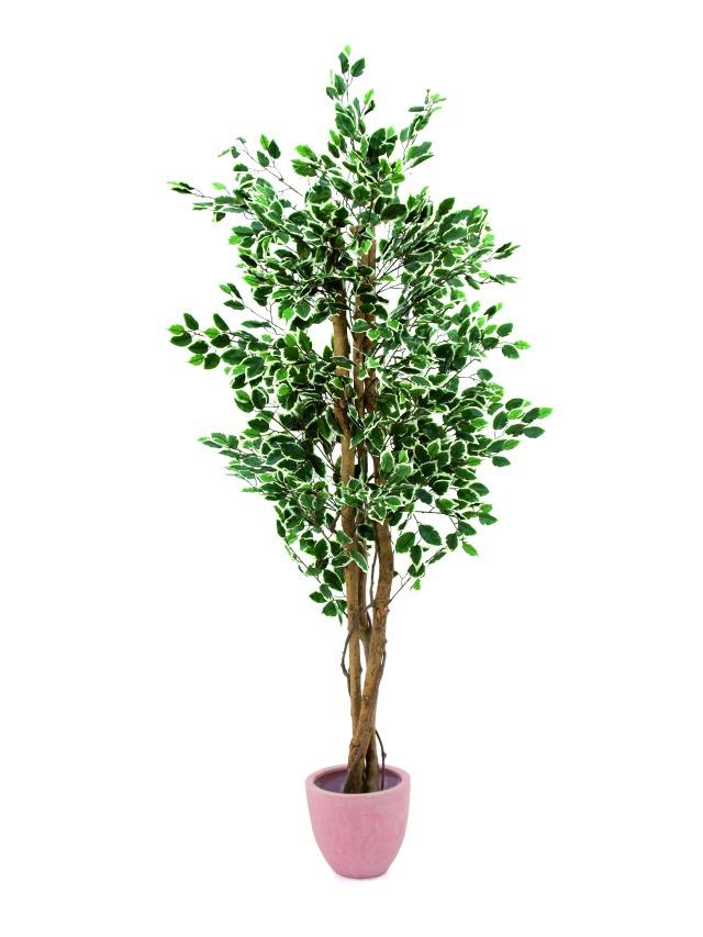 Billede af Kunstig Variegated Ficus, 180cm