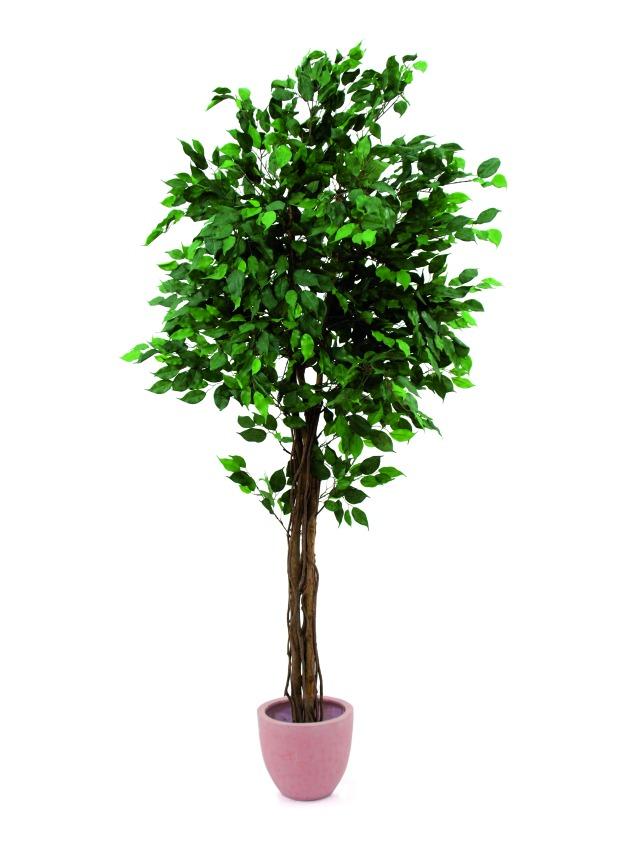 Billede af Kunstig Ficus tree multi-trunk, 180cm