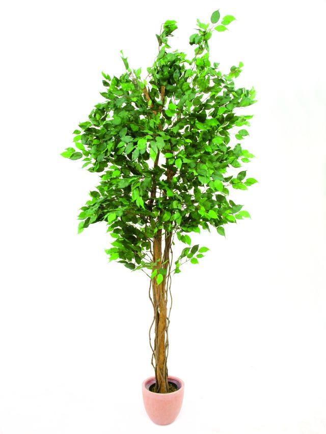 Billede af Kunstig Ficus tree multi-trunk, 210cm