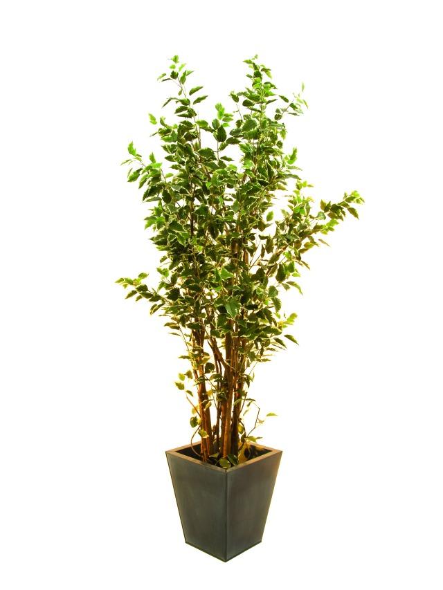 Image of   Kunstig Ficus tree deluxe, 210cm