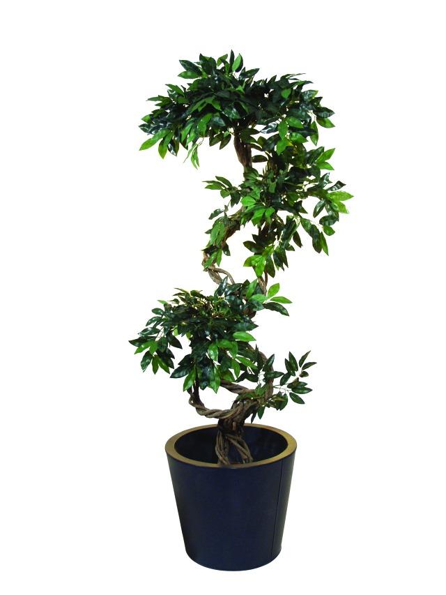 Image of   Kunstig Ficus spiral trunk, 160cm