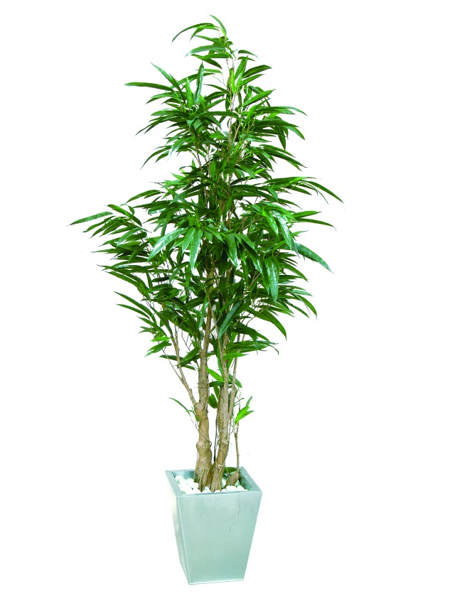 Image of   Kunstig Ficus longifolia, 210cm