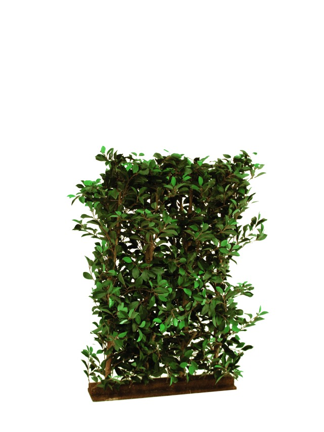 Image of   Kunstig Ficus Hedge, 90x130cm