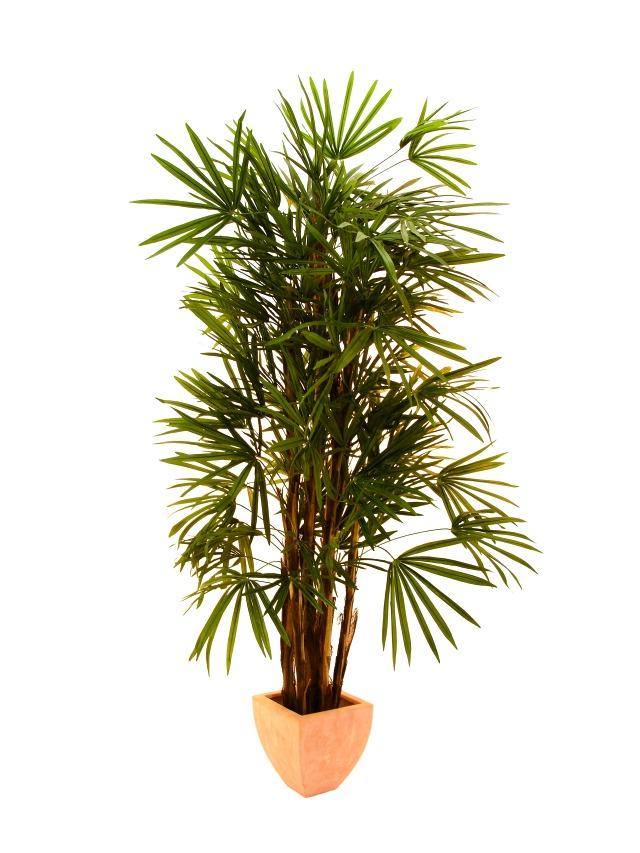 Image of   Kunstig Lady Palm, 200cm