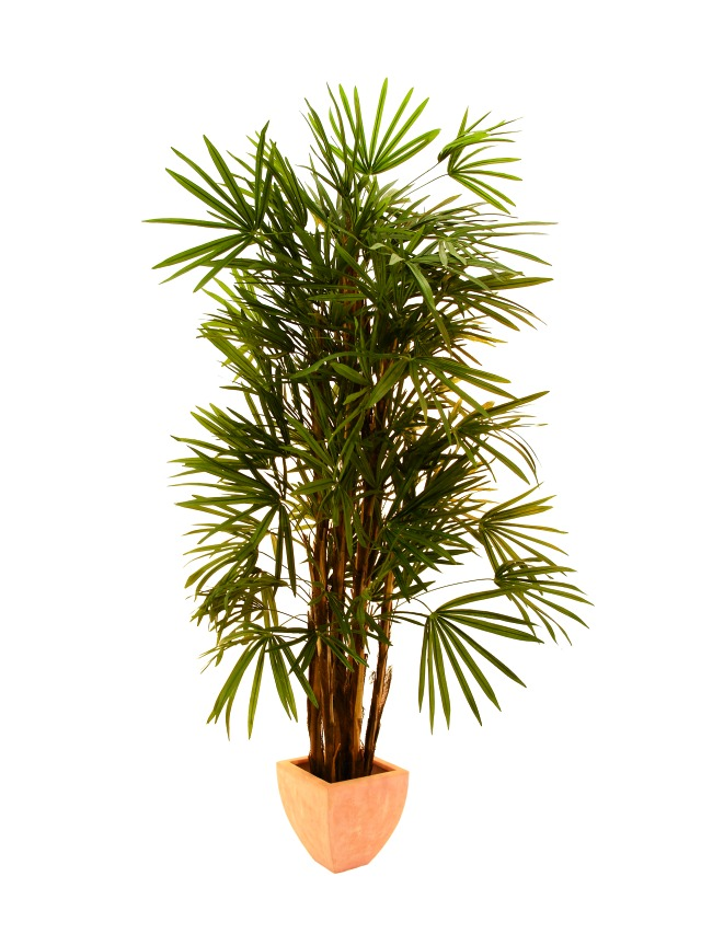 Image of   Kunstig Lady Palm, 210cm