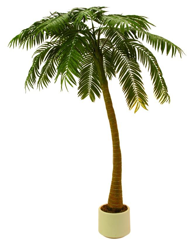Image of   Kunstig Palm, 1-trunk, 300cm
