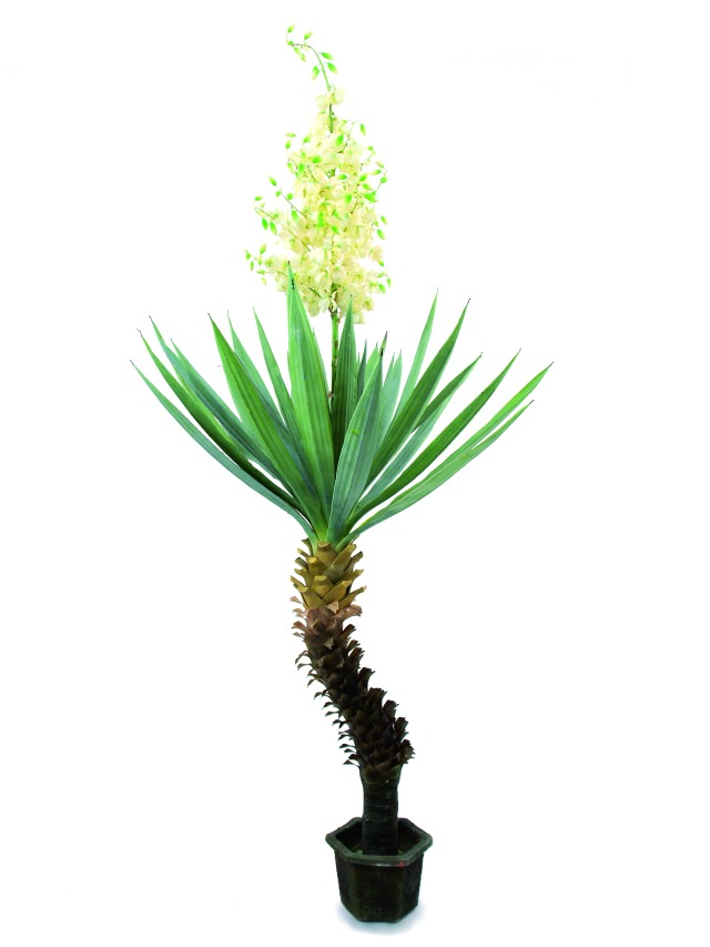 Image of   Kunstig Yucca palm with blossoms, 222cm