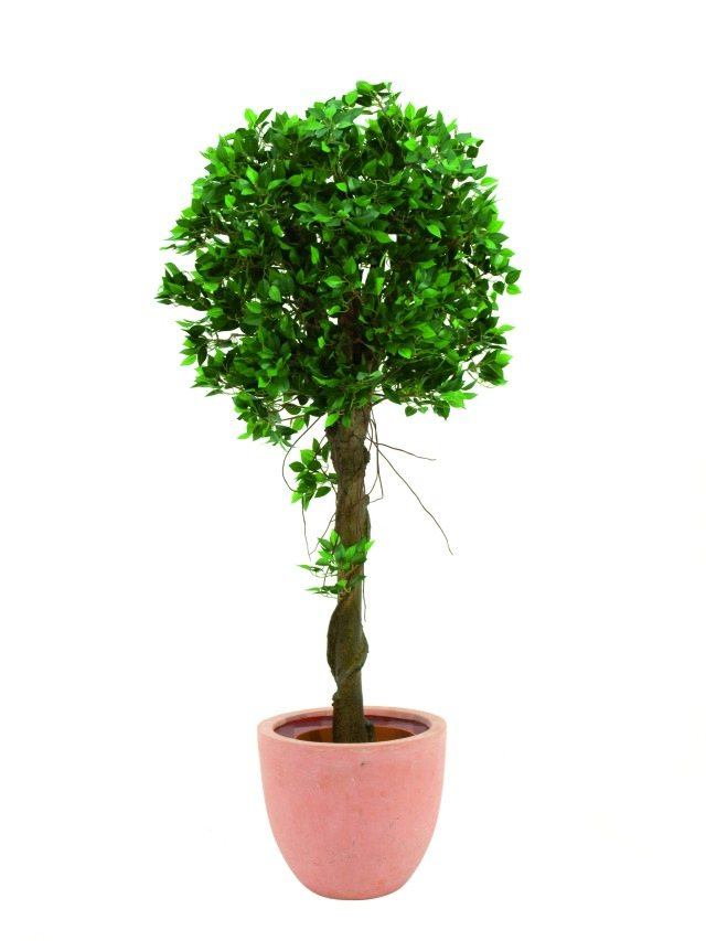 Image of   Kunstig Ficus balltree, 100cm