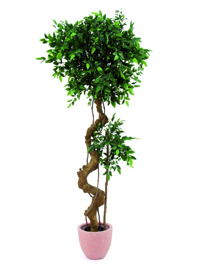 Image of   Kunstig Ficus bonsai trunk, 170cm