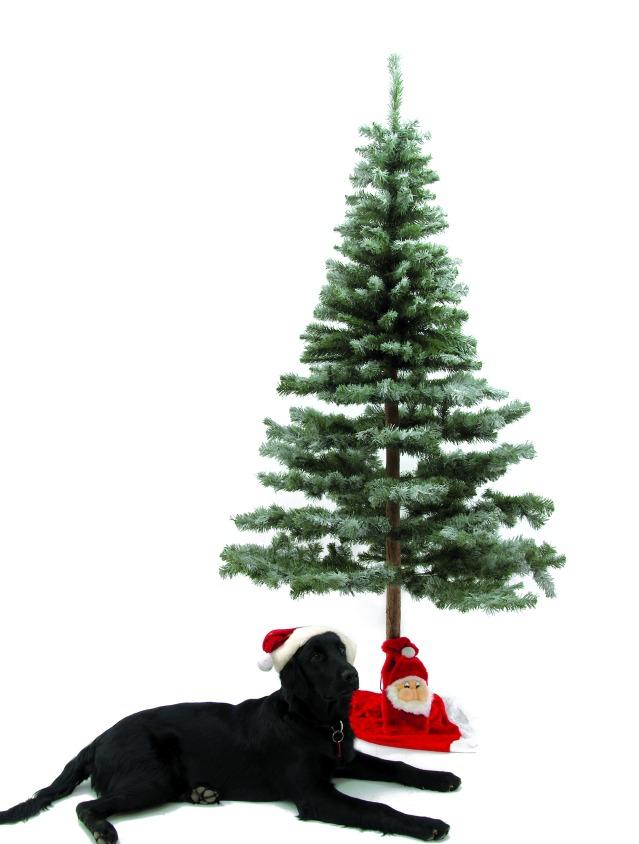 Billede af Fir tree, snow-flocked, 180cm