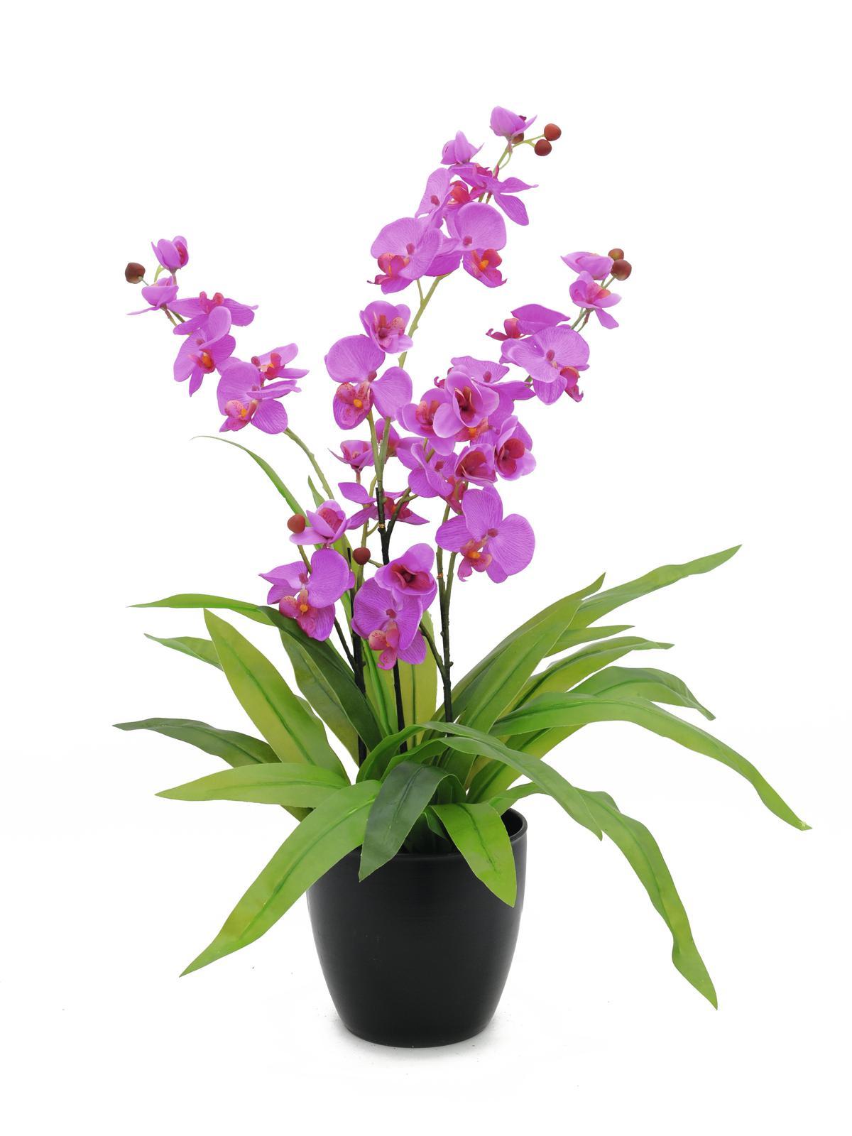 Image of   Kunstig Orchid, purple, 80cm
