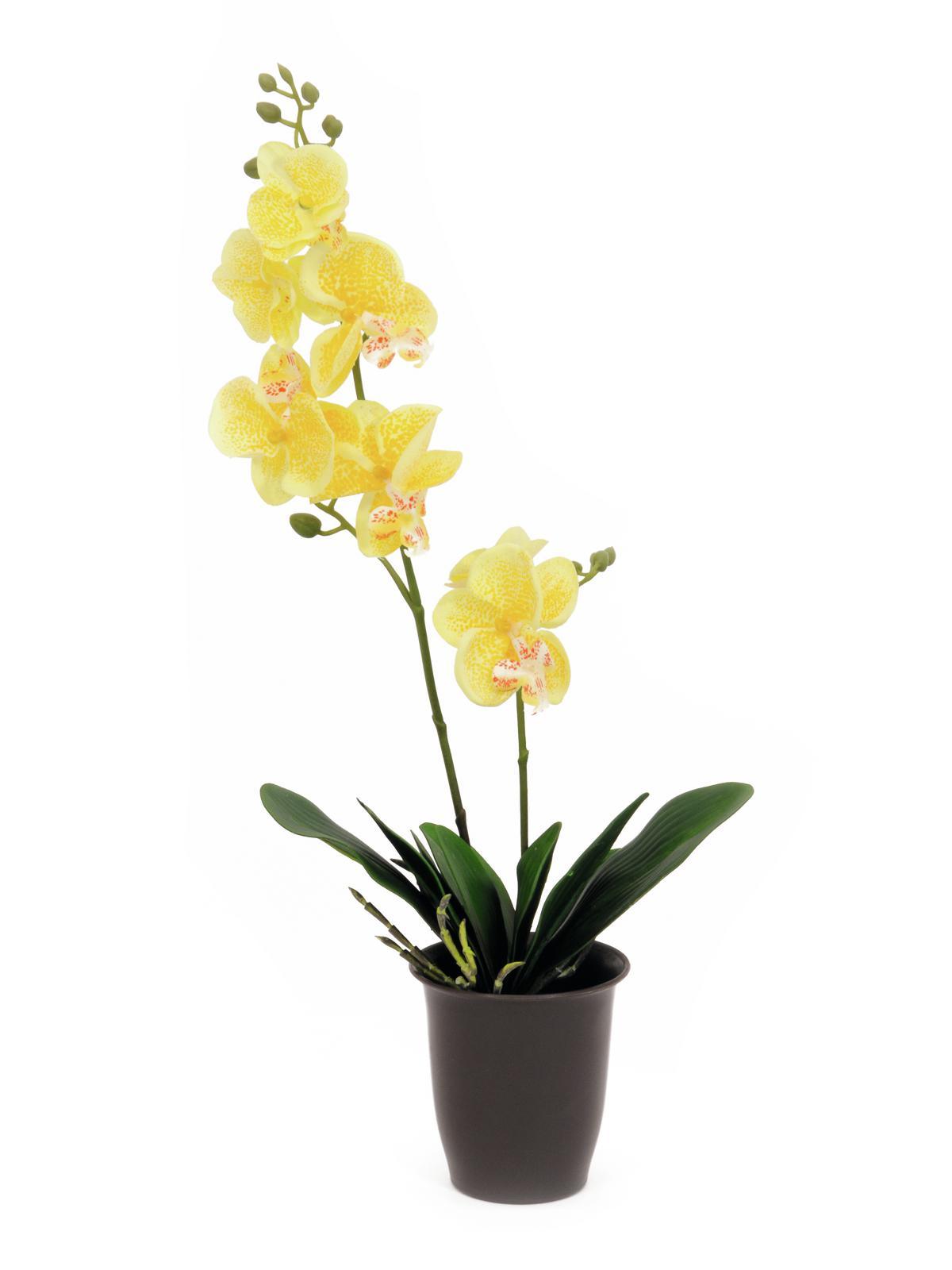 Image of   Kunstig Orchid, yellow, 57cm